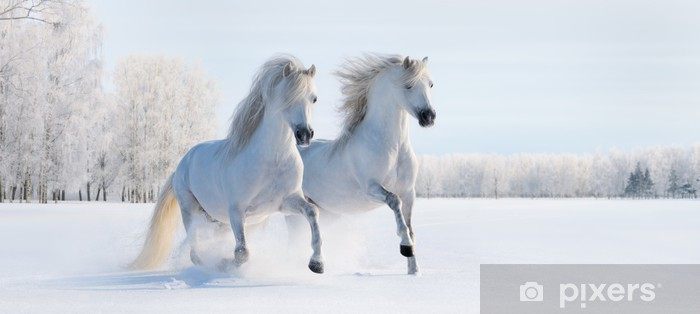Two galloping white ponies Vinyl Wall Mural - iStaging