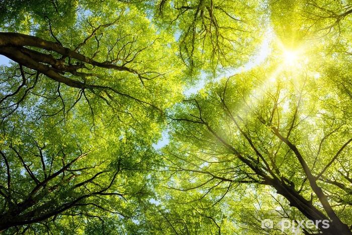 Afwasbaar Fotobehang De zon schijnt door de boomtoppen - Bomen
