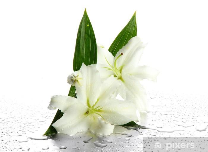 Papier peint vinyle Beautiful Lily isolé sur fond blanc - Fleurs