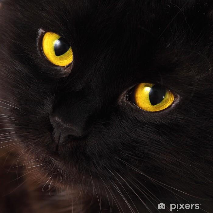 Sticker Pixerstick Black cat qui cherchent à vous avec des yeux jaunes lumineux - Thèmes