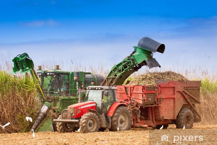 Naklejka Pixerstick Makro zbiorów trzciny cukrowej - Rolnictwo