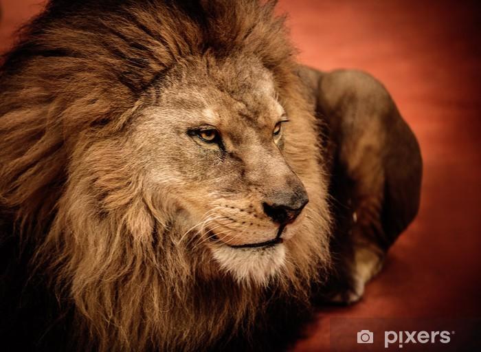Leijona makaa areenalla Pixerstick tarra -