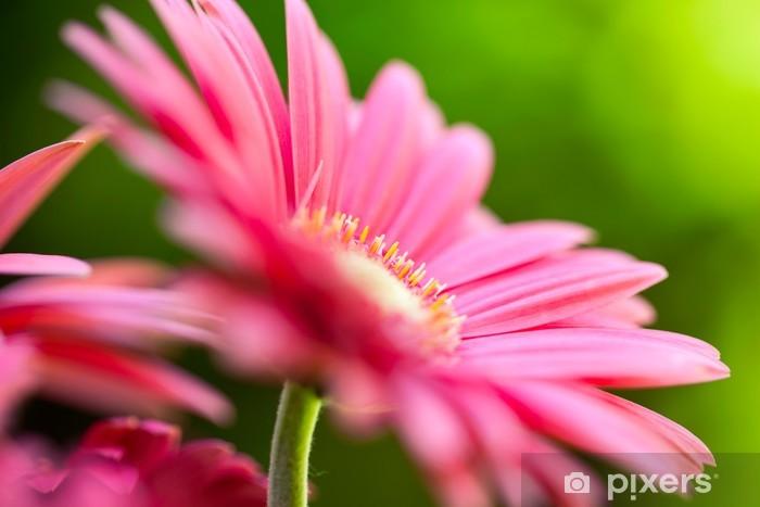 Papier peint vinyle Marguerite rose de gerbera dans le jardin - Fleurs