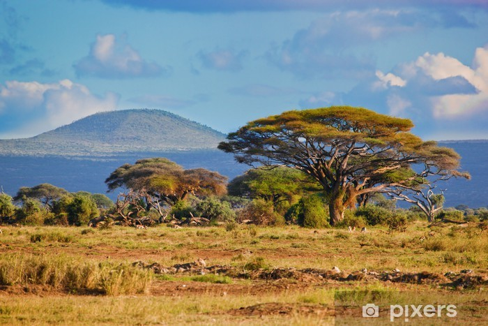 Vinyl Fotobehang Savannelandschap in Afrika, Amboseli, Kenia - Thema's