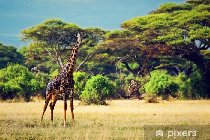 Sticker Pixerstick Girafe sur la savane. Safari dans les circuits budgétaires, Kenya, Afrique - Thèmes