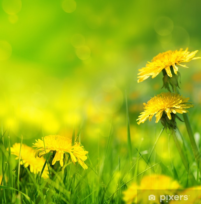 Fototapete Beautiful Spring Flowers Background Pixers Wir Leben