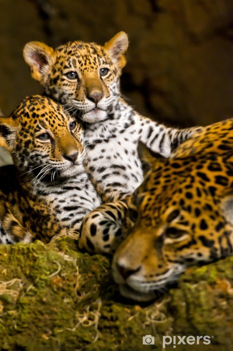 Sticker Pixerstick Jaguar Cubs - Vie