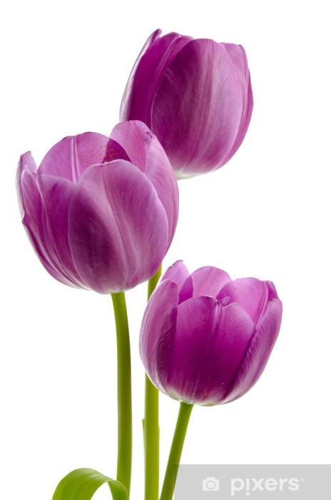 Sticker Pixerstick Drei Lila Tulpen - Fleurs