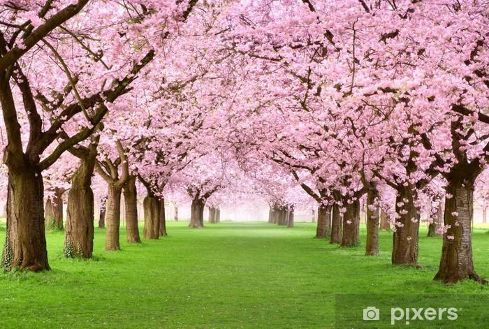Gartenanlage voller blütenprachtissä Vinyyli valokuvatapetti -
