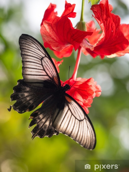 Vinyl-Fototapete Butterfly07 - Andere Andere
