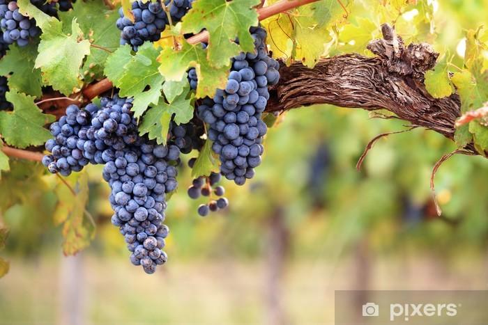 Sticker Pixerstick Raisins de vin rouge sur la vieille vigne - Agriculture