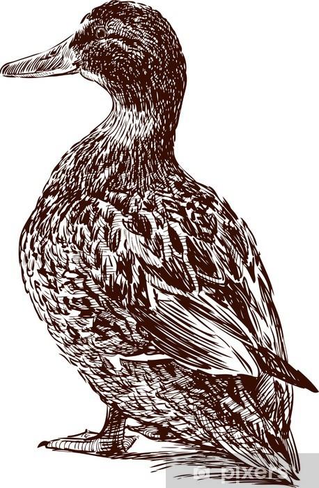 Fototapeta winylowa Słodkie Duck - Tematy