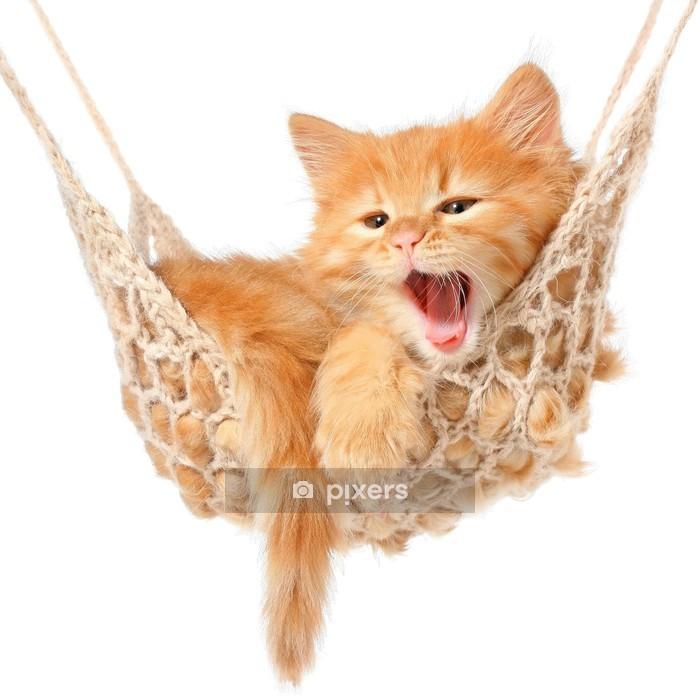 Muursticker Schattige roodharige kitten in hangmat - Bestemmingen