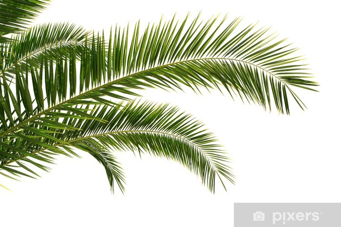 Palm Tree Leaves Isolated Wall Mural Pixers We Live To Change
