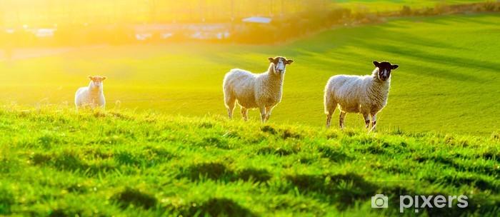 Papier peint vinyle Moutons frôlant au coucher du soleil - Mammifères