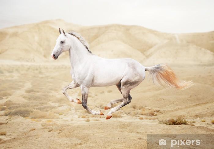 Vinyl-Fototapete Reinrassige weißes arabisches Pferd in der Wüste - Säugetiere