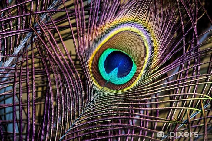 Papier peint vinyle Plumes de paon - Oiseaux