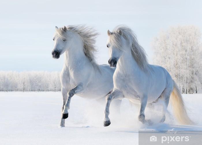 Fototapet av Vinyl Två vita hästar galoppera på snö fält - Teman