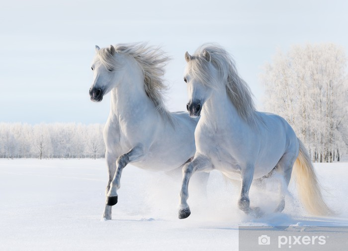 Two white horses gallop in the snow Pixerstick Sticker - Styles