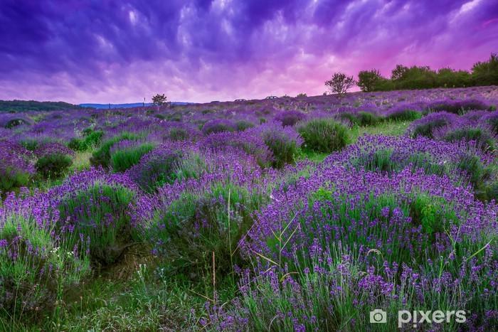 Pixerstick Sticker Zonsondergang over een zomer Lavendel veld in Tihany, Hongarije - Thema's