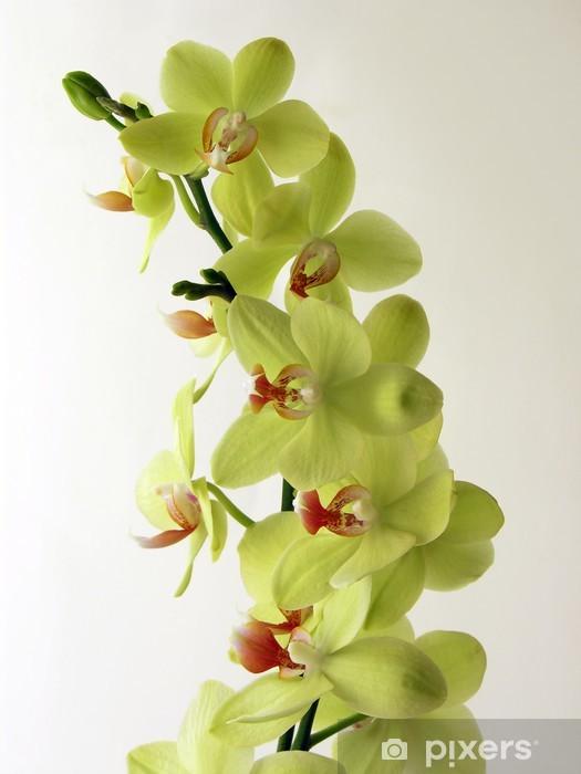 Mazzo Di Fiori Orchidee.Carta Da Parati Mazzo Di Fiori Di Orchidea Color Limone Pixers
