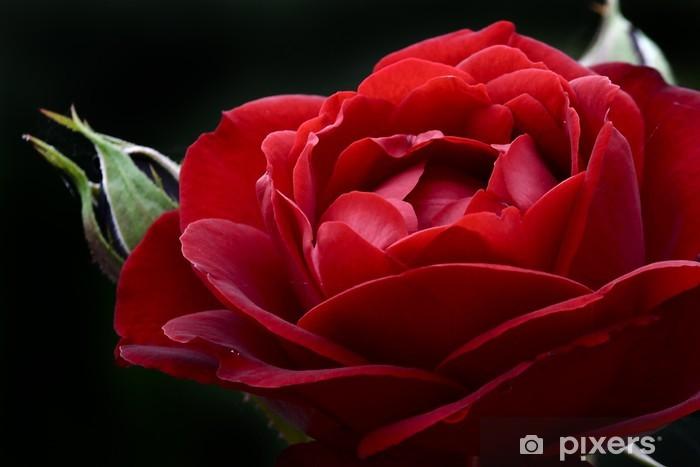 Fototapete Macro Di Una Rosa Rossa Con Bocciolo Pixers Wir