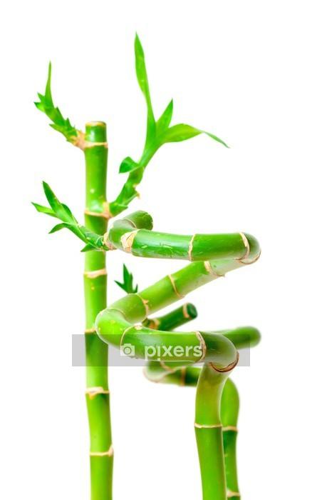 Sticker Mural Chanceux Bambou (Dracaena Sanderiana)
