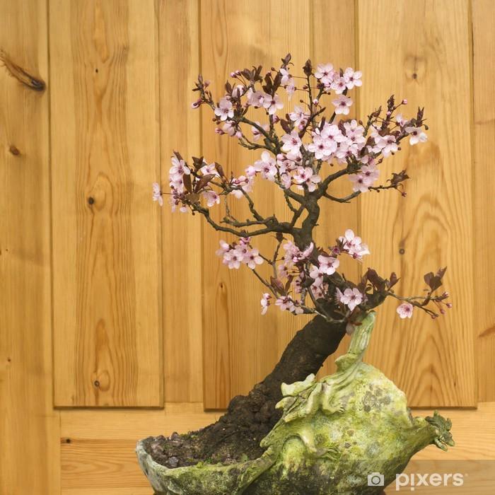 Papier peint vinyle Prunier japonais bonsaï (Prunus cerasifera) - Maisons et jardins
