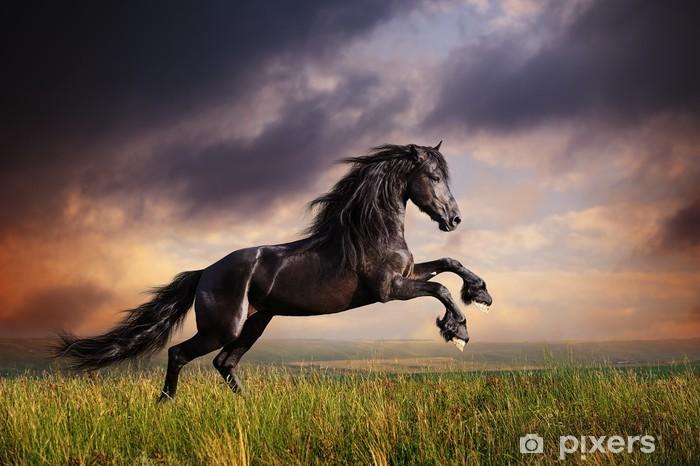 Fototapeta winylowa Czarny koń galop fryzyjski - Tematy