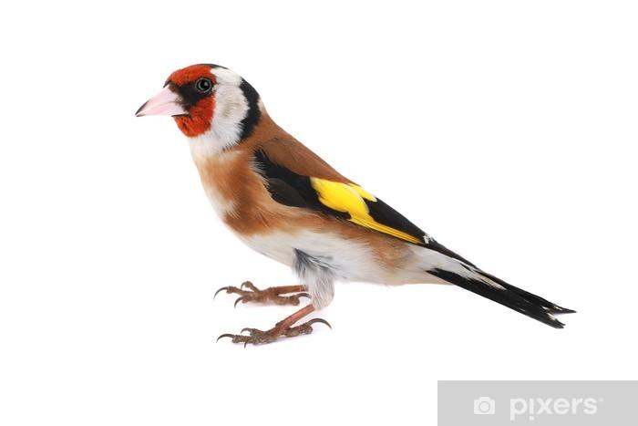 Nálepka Pixerstick Stehlík - Ptáci