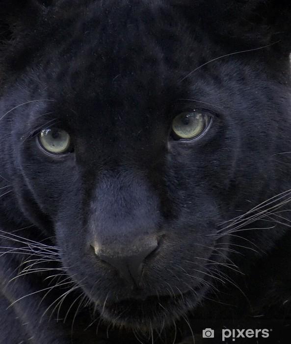 Fototapeta winylowa Czarna pantera - Ssaki