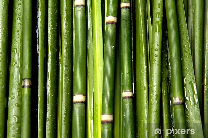 Sticker Pixerstick Fond vert bambou - Thèmes