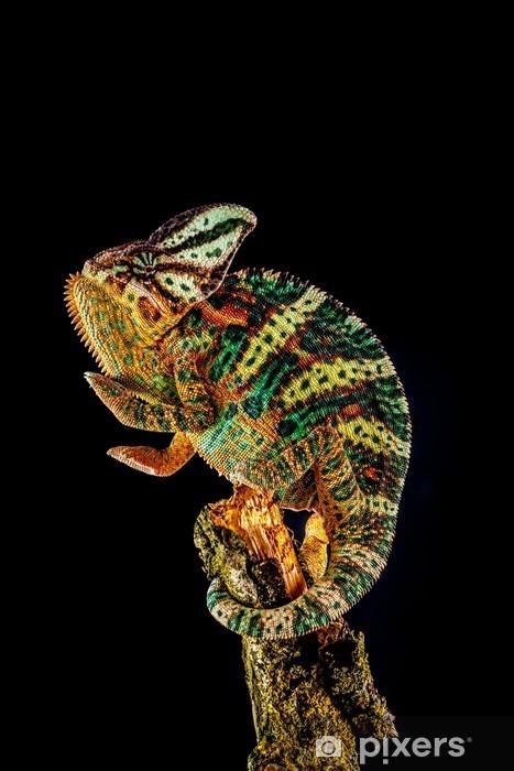 Yemen chameleon Pixerstick Sticker - Themes