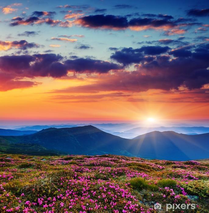 Naklejka Pixerstick Kwiat - Łąki, pola i trawy