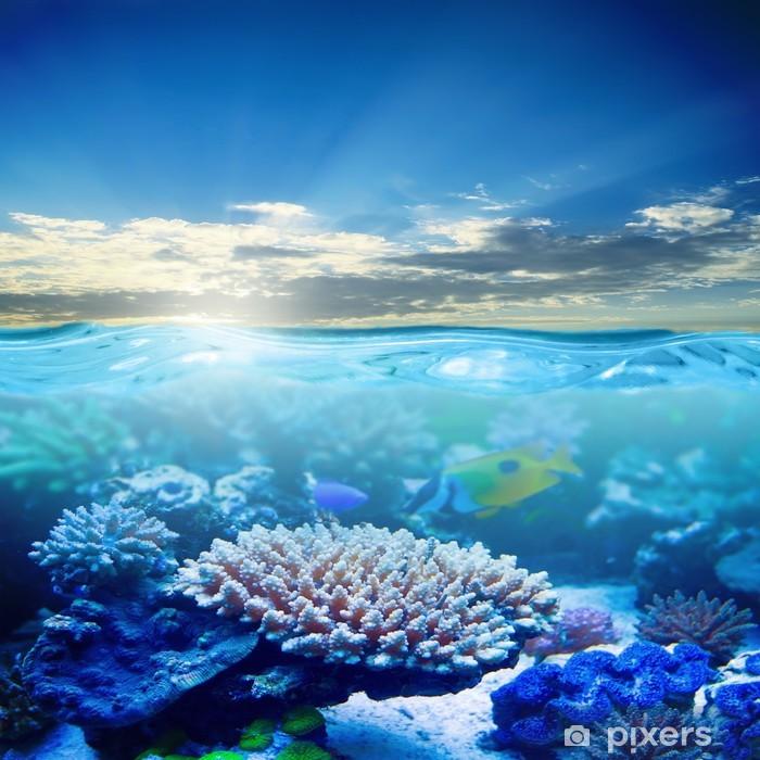 Plakat Życie morskie - Tematy