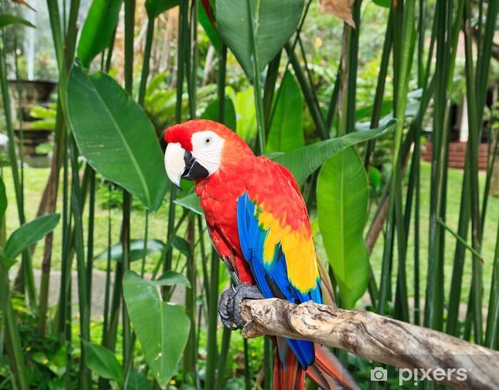 Papier peint vinyle Ara coloré dans la nature - Perroquets