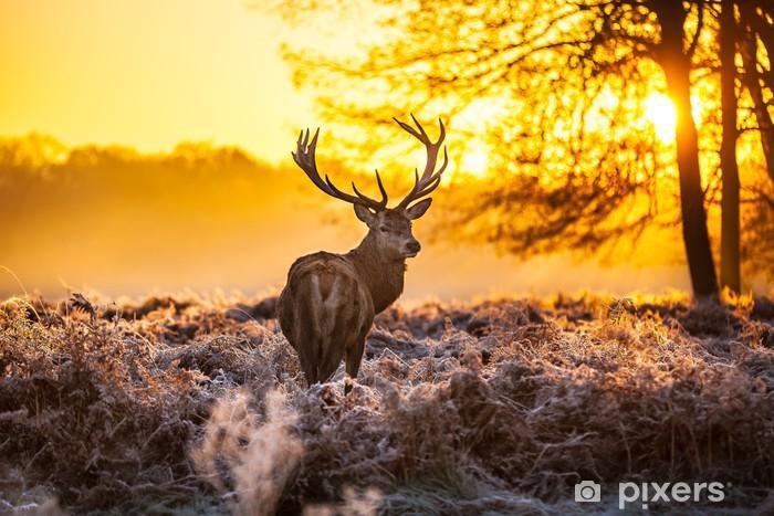 Papier peint vinyle Red Deer au soleil du matin. - Thèmes