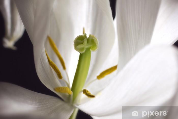 Papier peint vinyle Vue en gros plan de la tulipe blanche - Célébrations