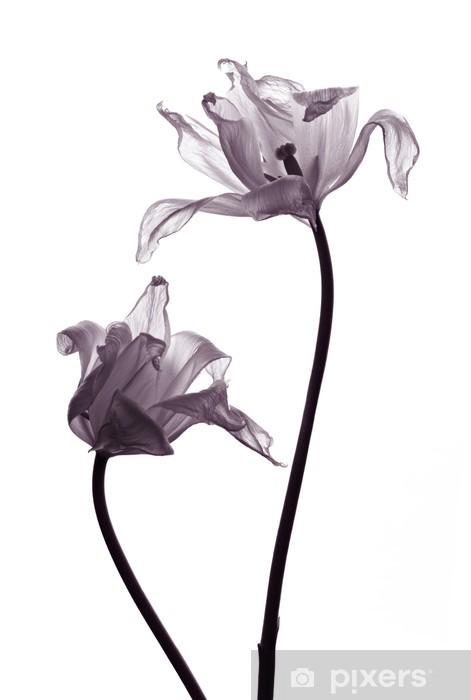 Carta da Parati in Vinile Sagome di tulipano sul bianco - Celebrazioni
