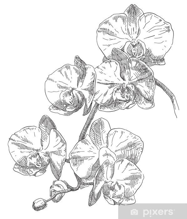Sticker Pour Porte Dessin à La Main Fleur Dorchidée