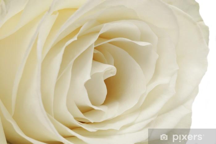 Carta Da Parati Rosa Bianca : Carta da parati rosa bianca close up u2022 pixers® viviamo per il