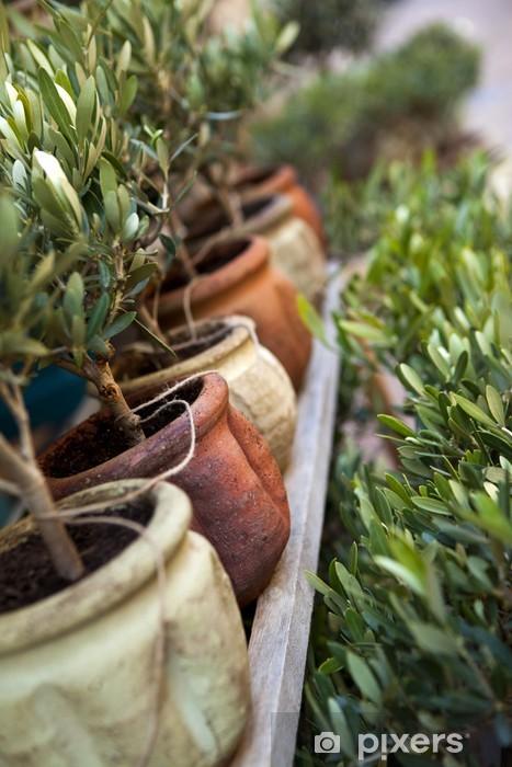 Olivier, plante, arbre, pot, jardin, Provence, terrasse Wall Mural ...