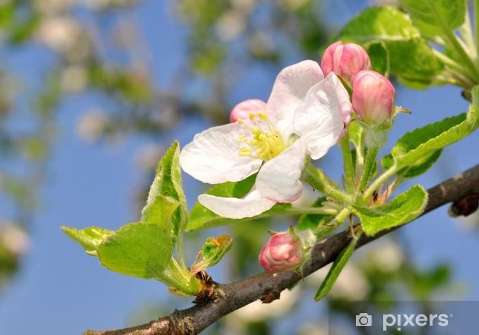 Papier peint vinyle Fleurs de printemps - Saisons