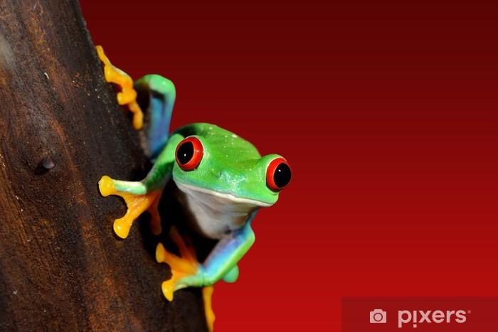 Vinilo Pixerstick De ojos rojos rana Agalychnis callidryas terrario - Ranas
