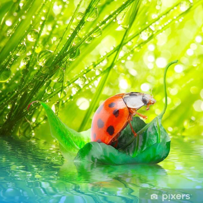 Little ladybug floating on the leaf. Poster - Seasons