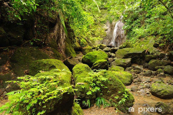 Fototapeta winylowa Kolumbijskiej dżungli Darien dziki - Dżungla