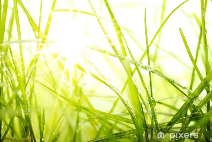 Papier Peint Autocollant L'herbe verte d'été et le soleil -