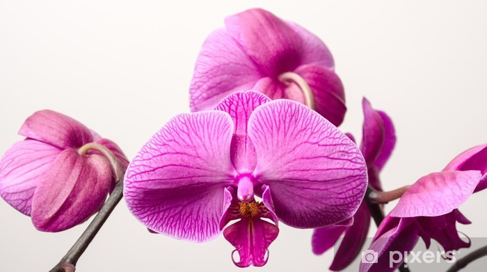 Vinylová fototapeta Orchidej kvete - Vinylová fototapeta