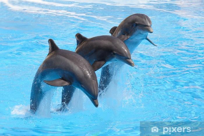 Naklejka Pixerstick Trio z delfinami - Tematy