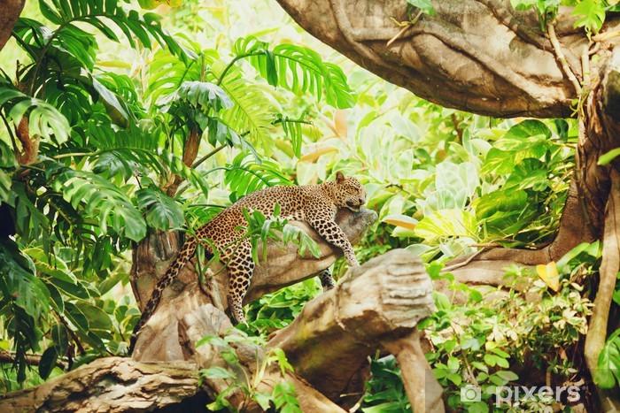 Ağaç dalı üzerinde duran (uyku) leopar